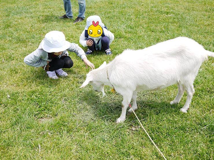 【蔵王ハートランド】動物とのふれあい体験。ランチはチーズシェッドで絶品ナポリタン!